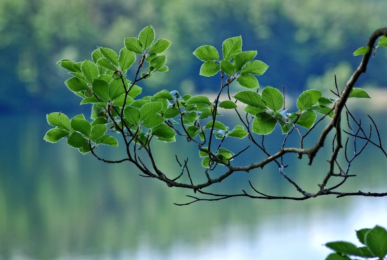 Challenge Printemps 2017 - Des feuilles, des feuilles...